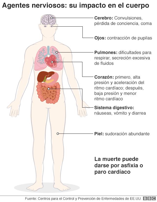 Un gráfico sobre los efectos de los agentes nerviosos en el cuerpo
