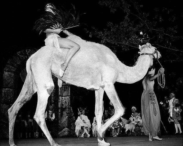 la bailarina francesa Renee 'Zizi' Jeanmaire llega montada en una camello