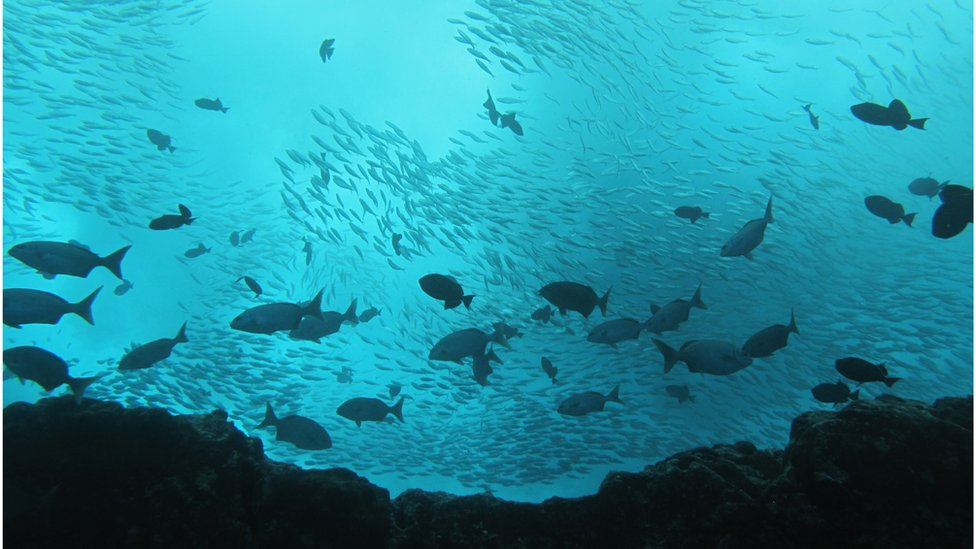 Cardumen de peces en la reserva Vitória-Trindad.