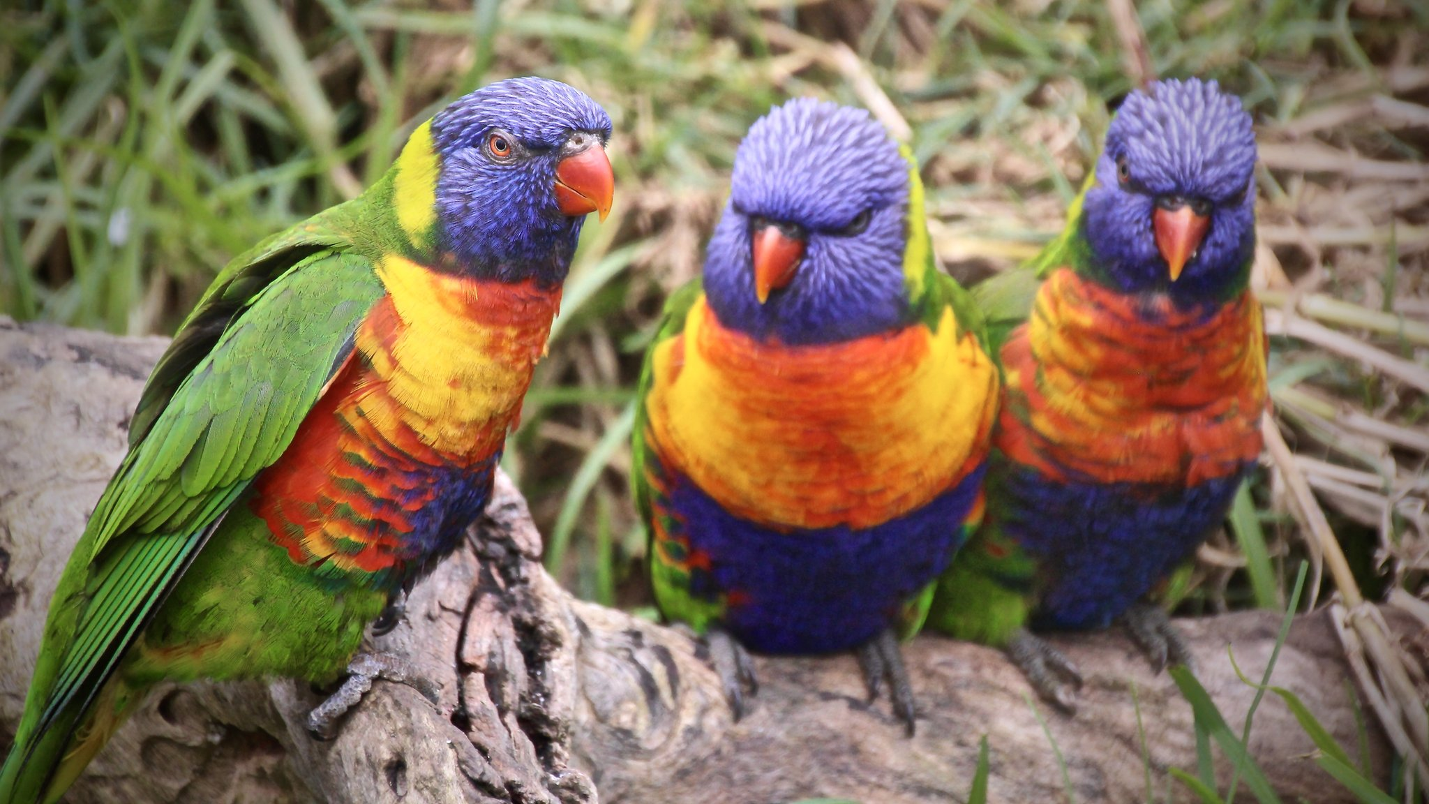 Drusillas Park's lorikeets killed by rat poison