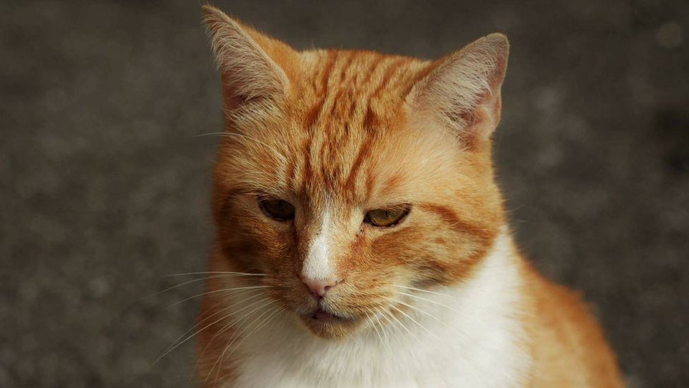 Ely Sainsbury's cat Garfield holds 'book signing'