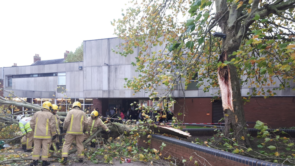 Woman crushed by falling tree in Market Drayton
