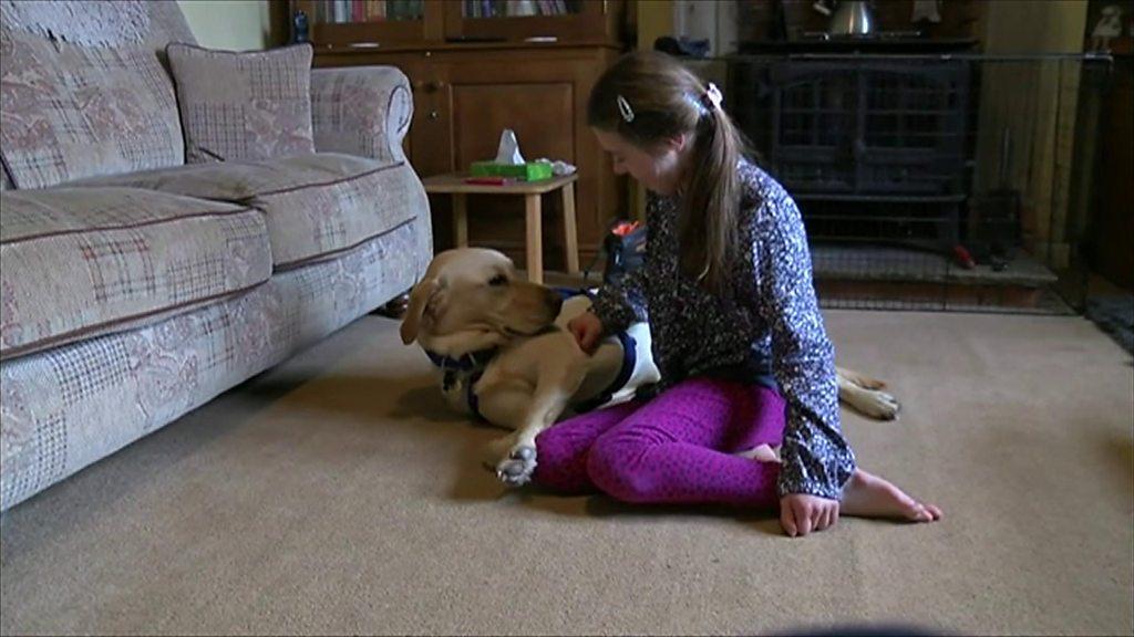 Meet Molly and her support dog Chess - CBBC Newsround - CBBC Newsround