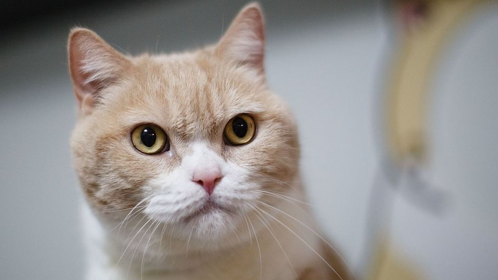 Pets at Home recalls food after cats 'collapse'