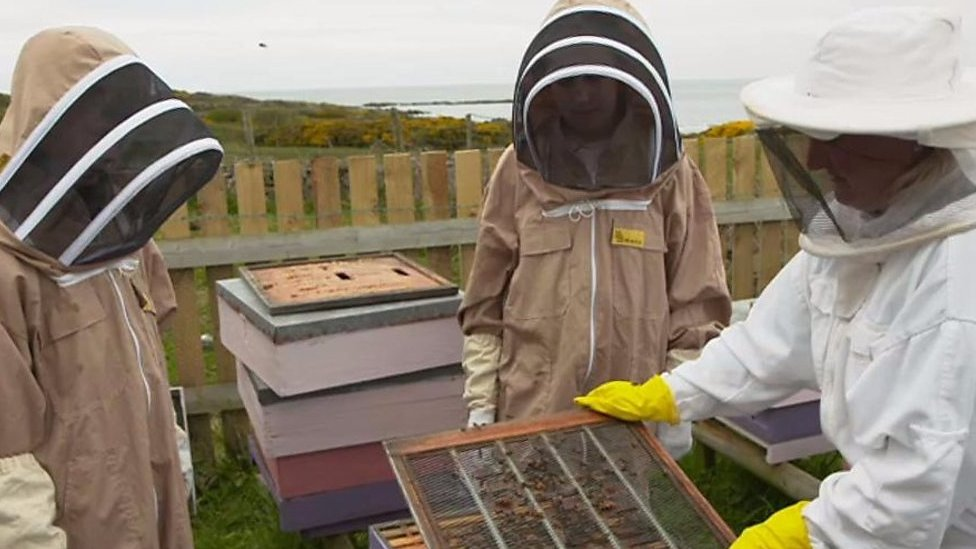 How junior beekeepers are helping the insects