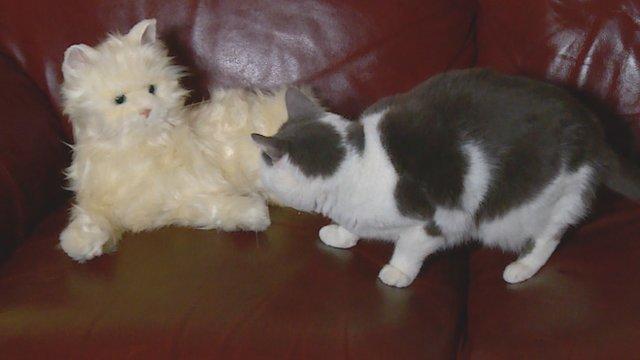 Robocat meets a real cat