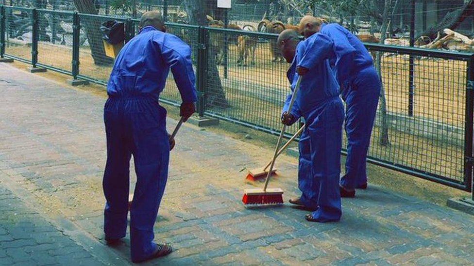 متهمون بتعذيب قطة سينظفون حديقة حيوانات دبي لمدة أربع ساعات يوميا طوال ثلاثة أشهر