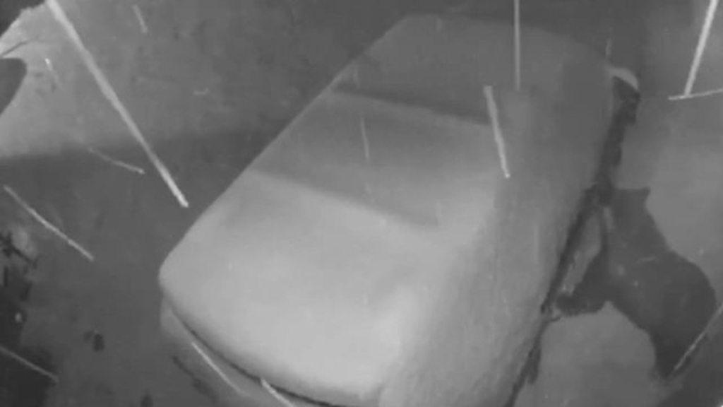 Nimble bear manages to open car door
