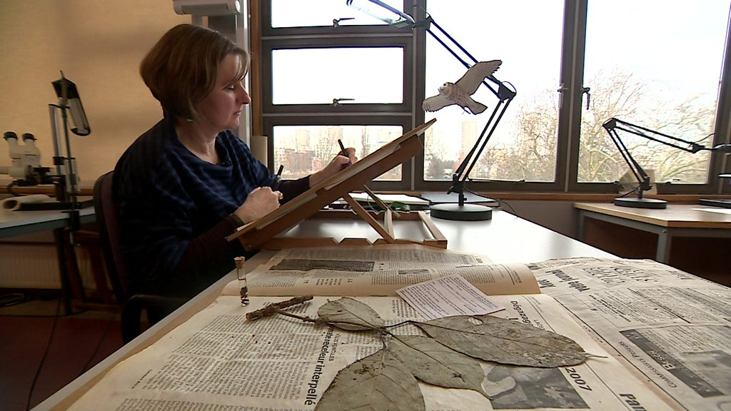 Botanical artist brings rare plants back to life