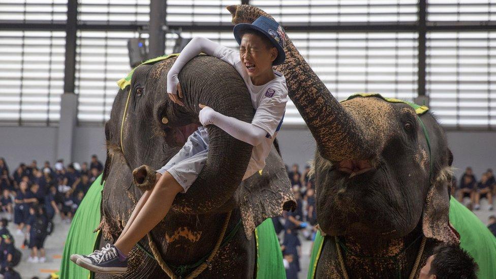 2017年8月,泰國芭提雅,大象用鼻子卷住一名遊客並伸到空中