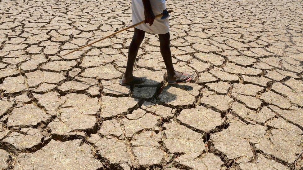 Petani India di ladang kapas kering di sebelah timur Hyderabad pada tanggal 25 April 2016