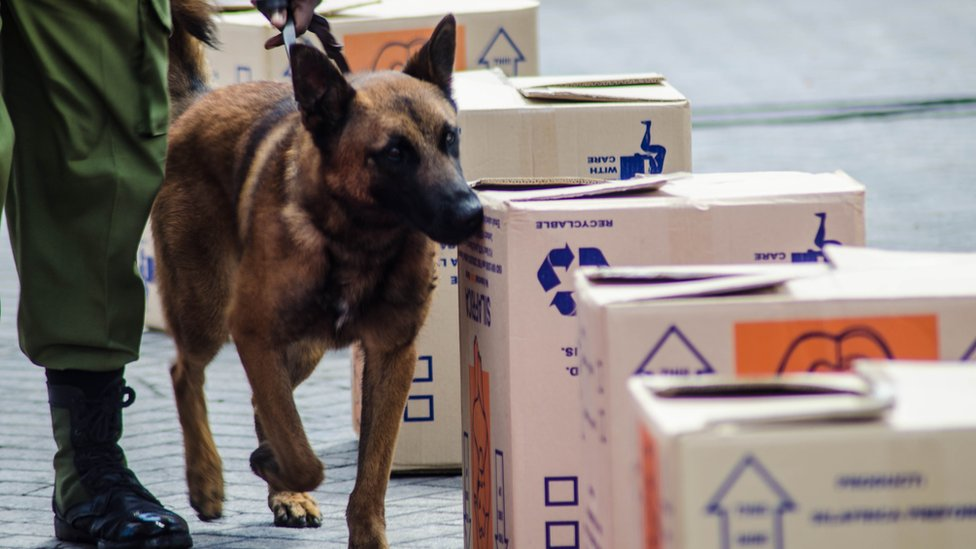 Tanzania hunt for top ivory-sniffing dog