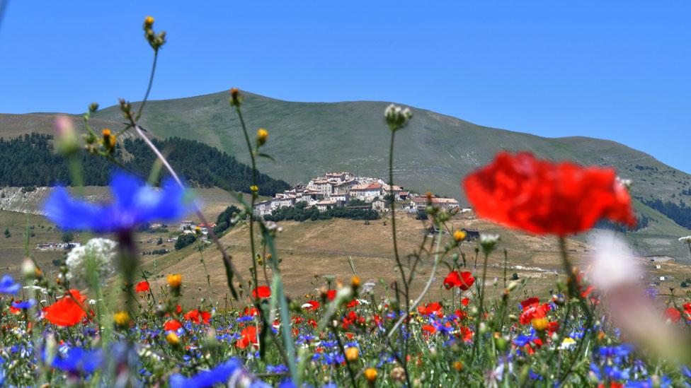 Amapolas rojas y scabiosas azules con los edificios de Castelluccio al fondo