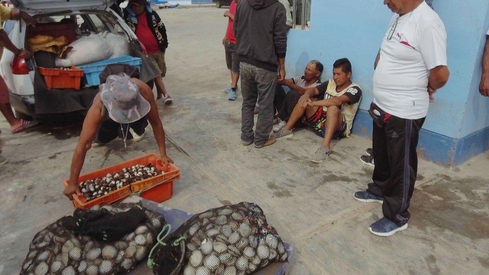 Bucear y recolectar el marisco es sólo una parte del trabajo de los mariscadores. También tienen que venderlo. (Foto: V. M. Vásquez)