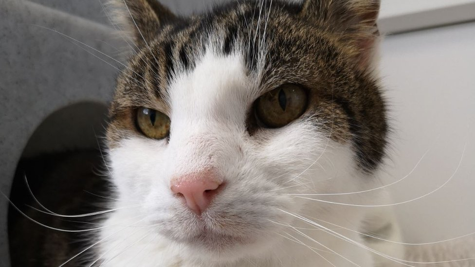 Missing cat Peanut found after 10 years in Norfolk