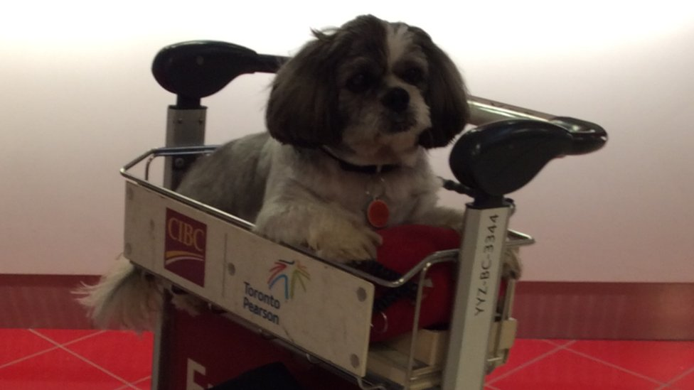 Your stories of taking pets on planes