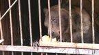 Bear eating loaf of bread