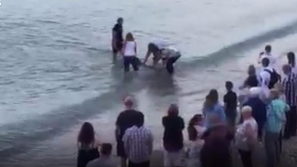 Passers-by rescue dolphin on Weymouth beach