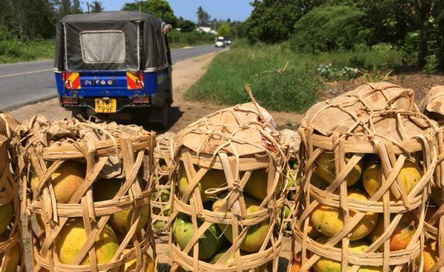 Cestos con mangos a la orilla de un camino en Kenia