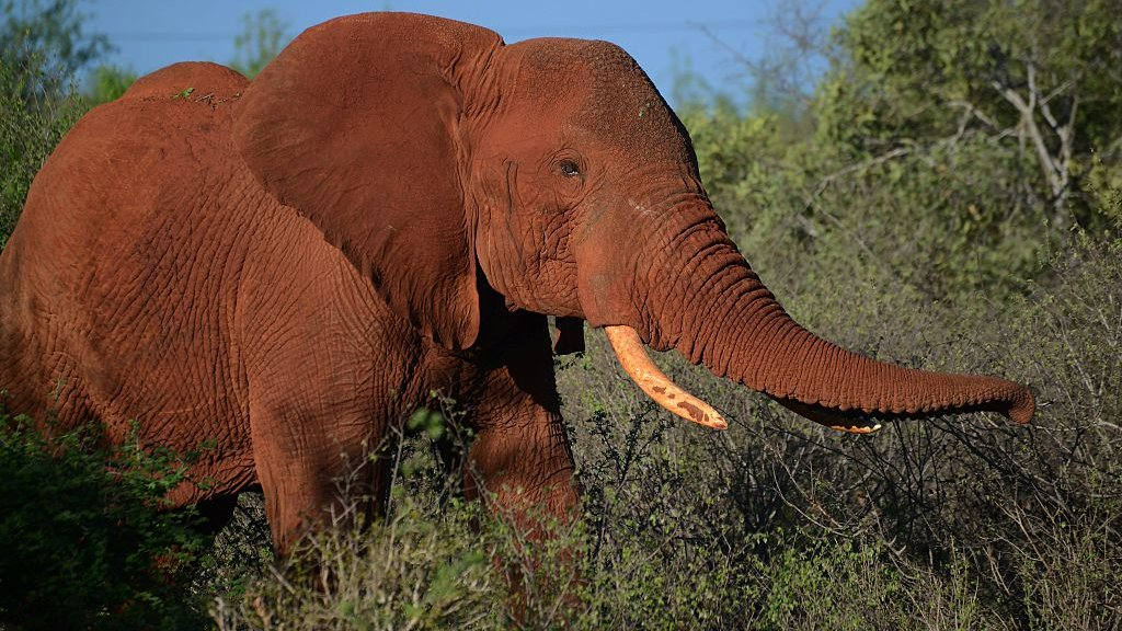 US to lift ban on elephant hunting trophy imports