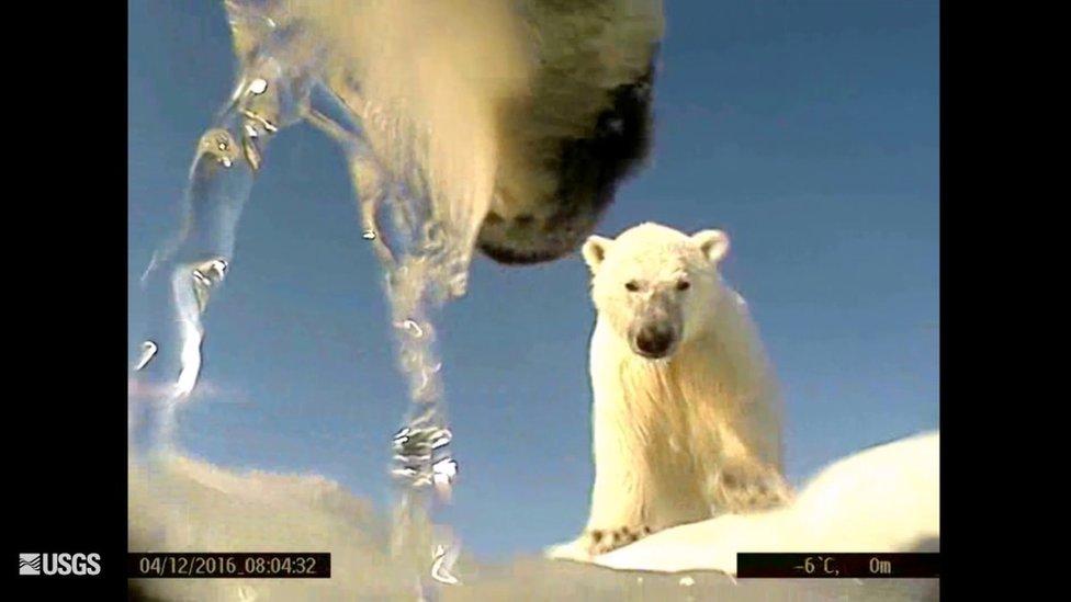 La vista subjetiva de una de las cámaras usadas en el estudio. (Foto: USGS)