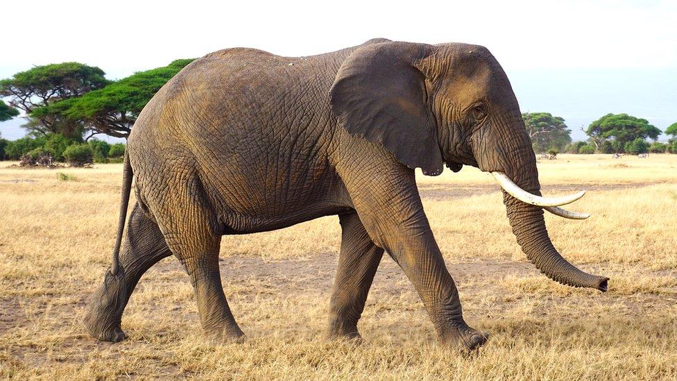 Botswana's Ian Khama: Trump encouraging elephant poaching