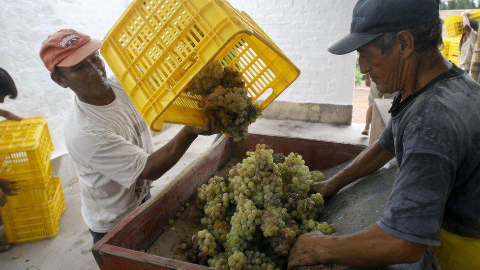 Se dice que hay diferencias en la uva usada en ambas naciones.