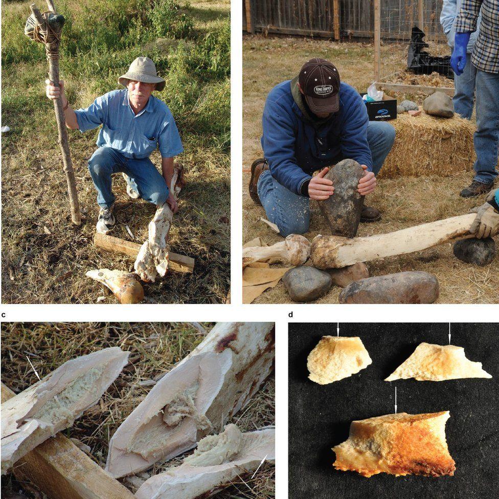 Cuando los investigadores experimentaron rompiendo huesos de elefante con las mismas herramientas, las fracturas en los huesos resultaron iguales a las de los fósiles del yacimiento de San Diego.