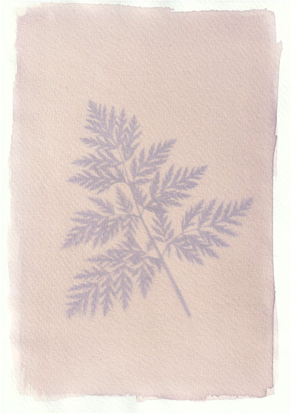 An anthotype print of a purple leaf