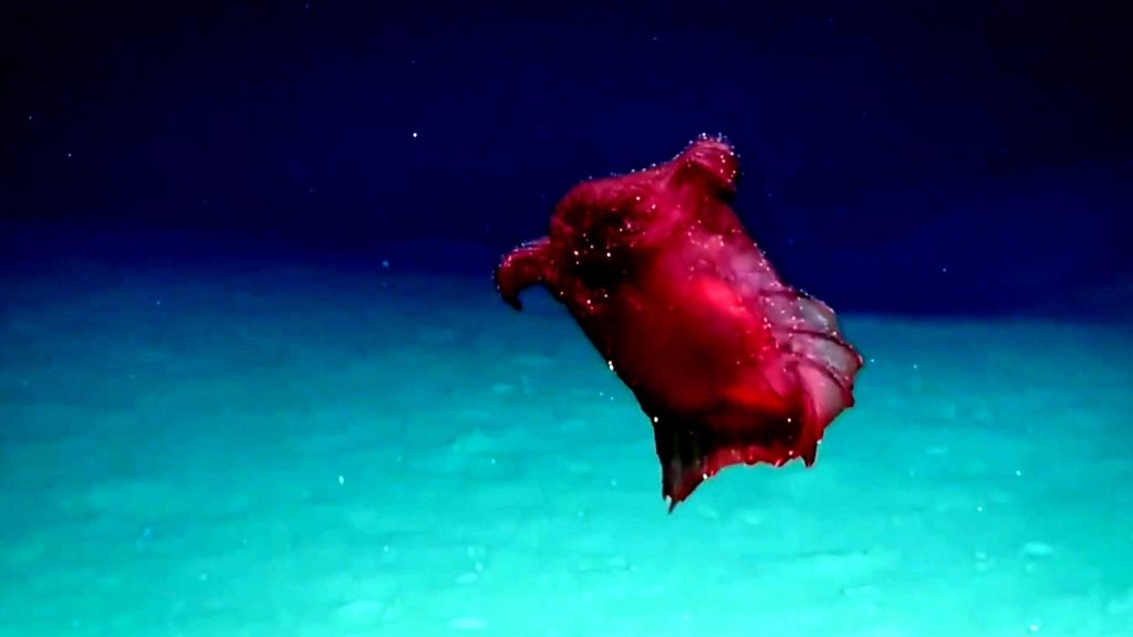 'Headless chicken sea monster' captured on film