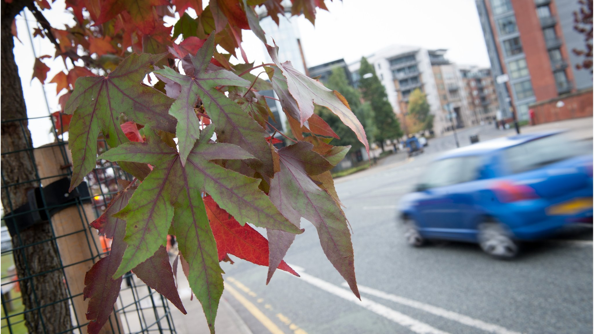 Project aims to grow a 'city of trees'