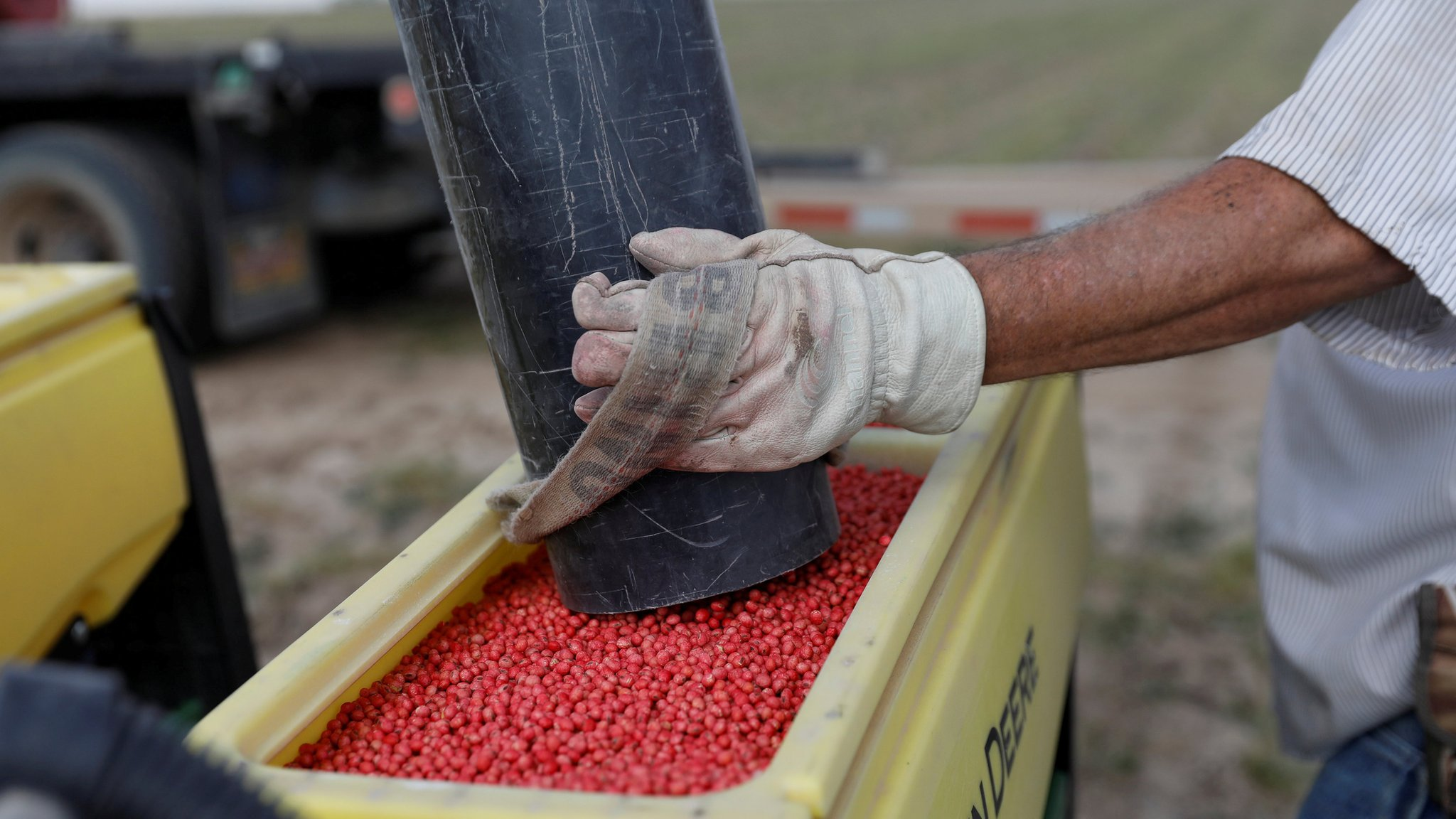 China buys US soybeans for first time since trade war