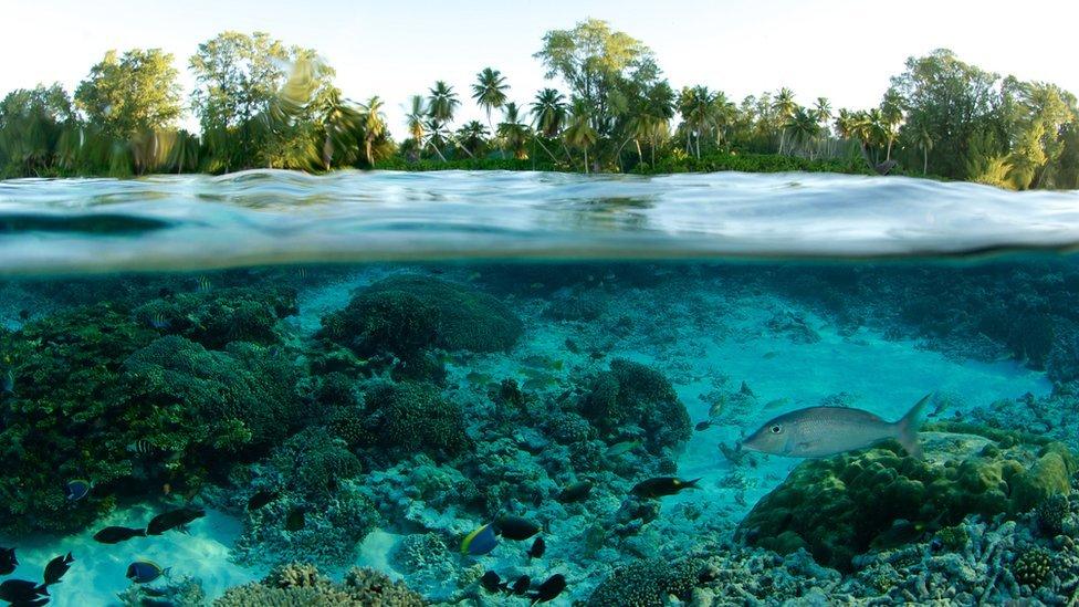Bajo y sobre el agua