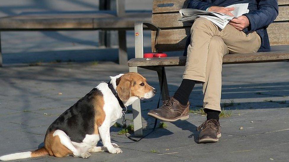 Un perro con su dueño en un parque.