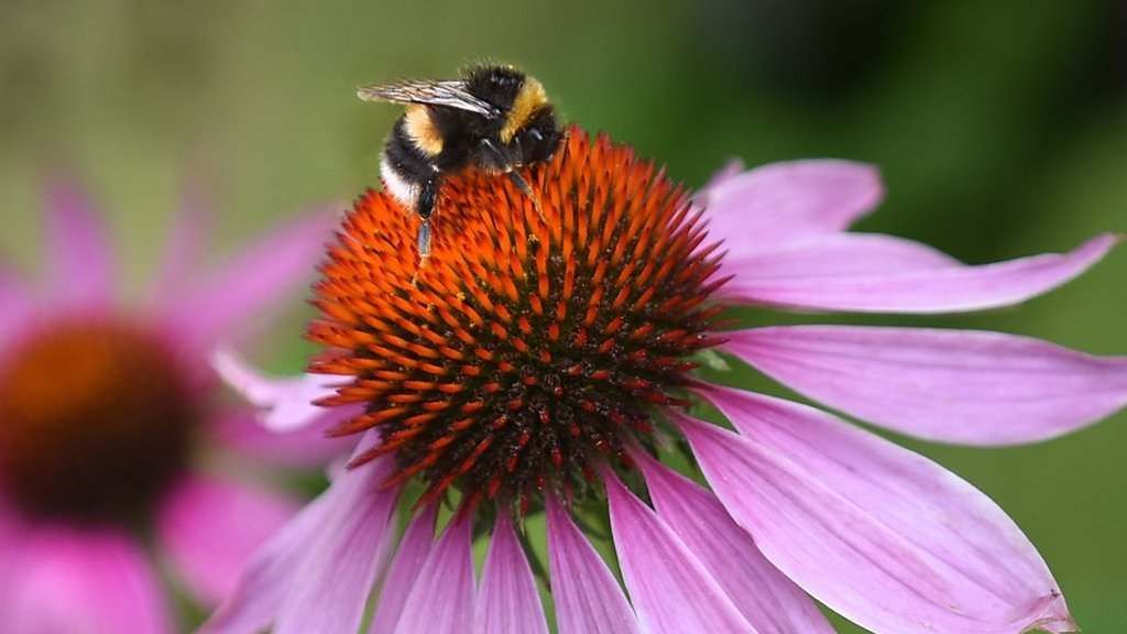 Insects decline: What do insects actually do?