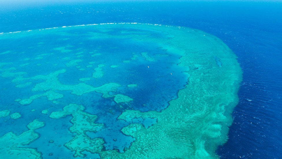 Great Barrier Reef: One million tonnes of sludge to be dumped