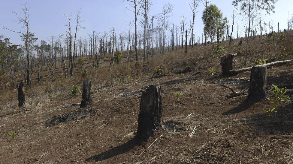 Bosque talado