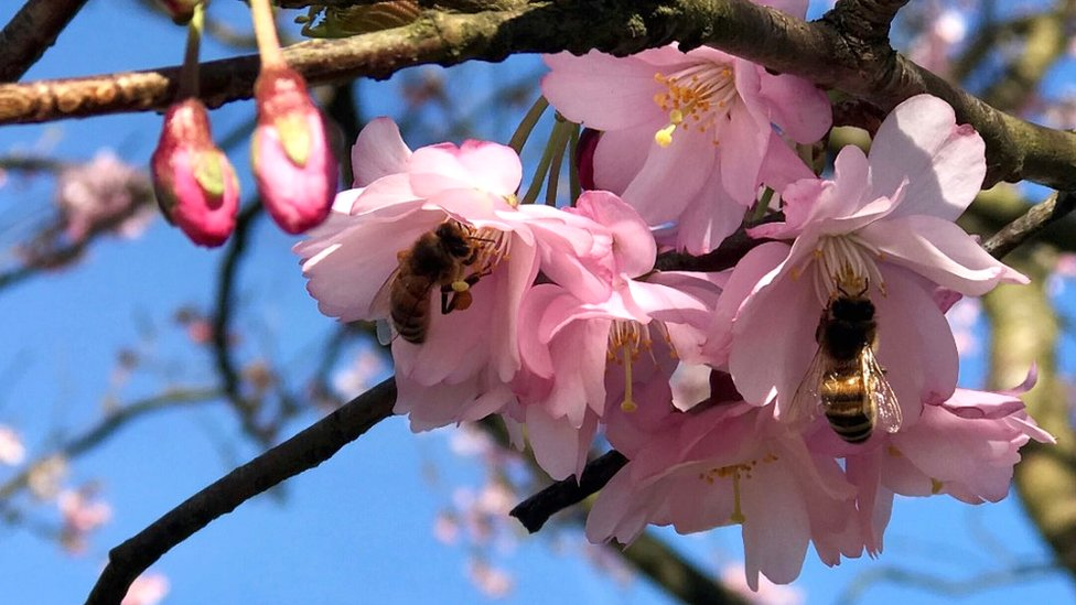 Spring arrival: Public to capture new season in words