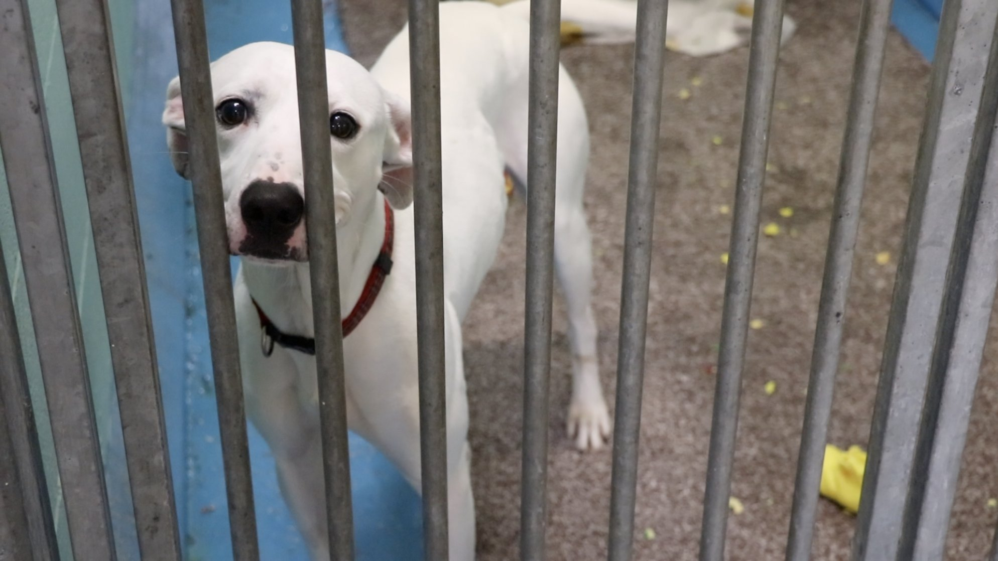 Newcastle Cat & Dog Shelter appeal aims to keep animals warm