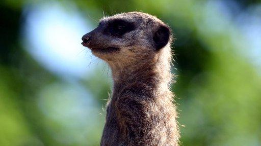 Brexit: May mimics TV meerkat's catchphrase