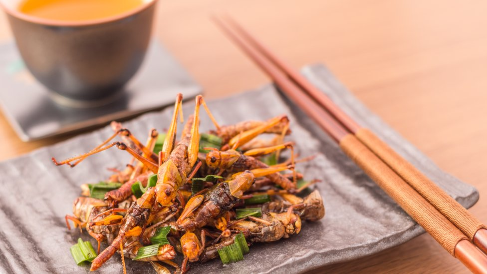 Crickets have hit the high street - can they save the planet?
