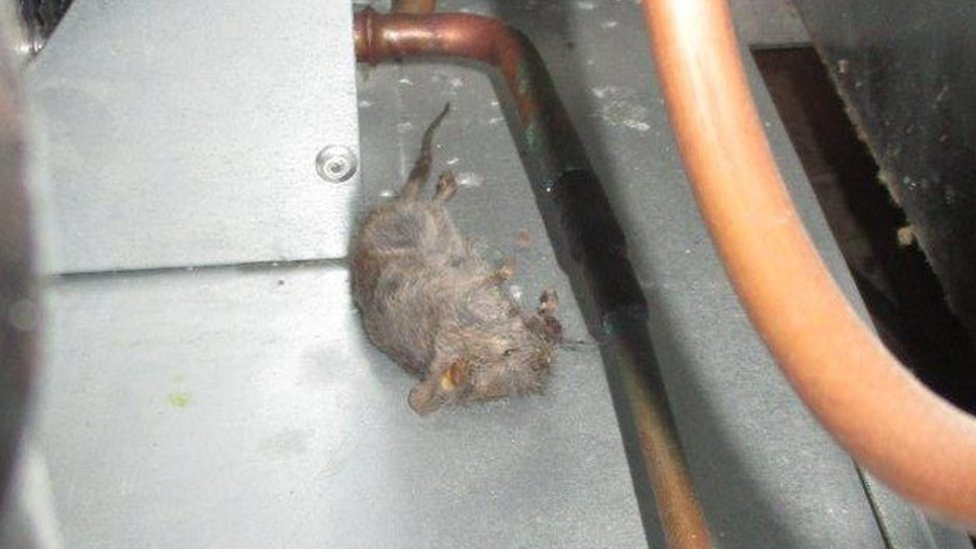 <![CDATA[Liverpool Thai restaurant's owners fined after dead mice found]]>