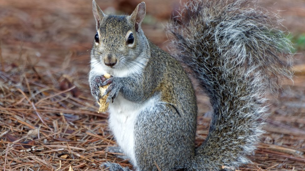 Squirrel 'threat' to critical infrastructure