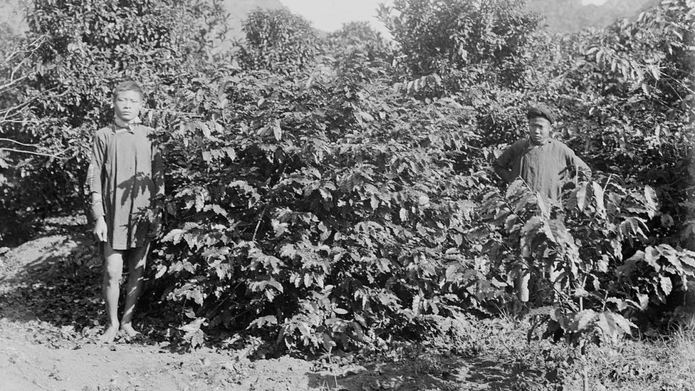 Dos trabajadores entre cafetales en la plantación de la Cressonnière en una foto de 1898 tomada por Firmin André Salles (Biblioteca Nacional de Francia).