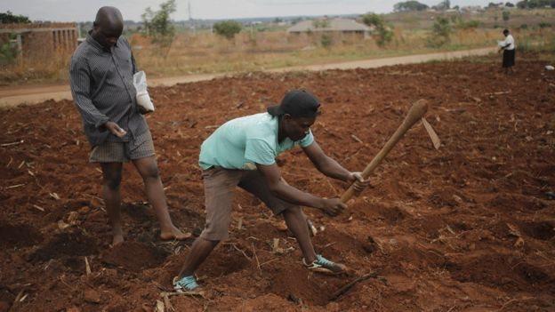 Agricultores en Zimbabue