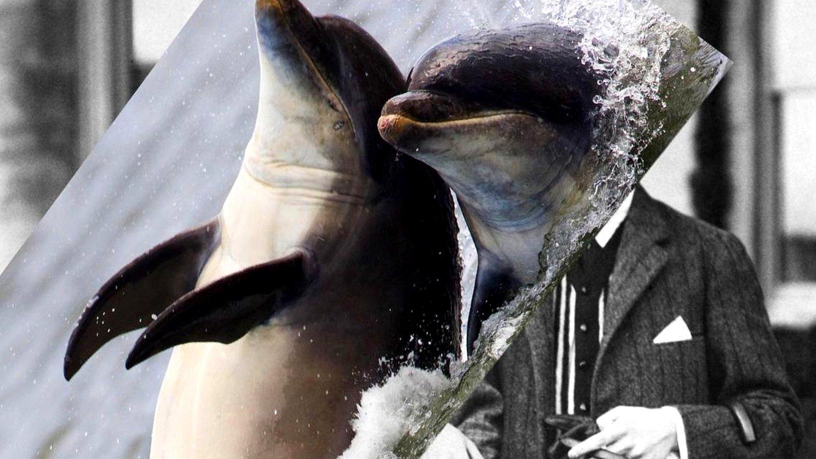 Каждый из нас немного дельфин. Или летучая мышь