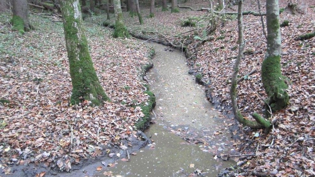 Billingshurst farm fined for polluting river