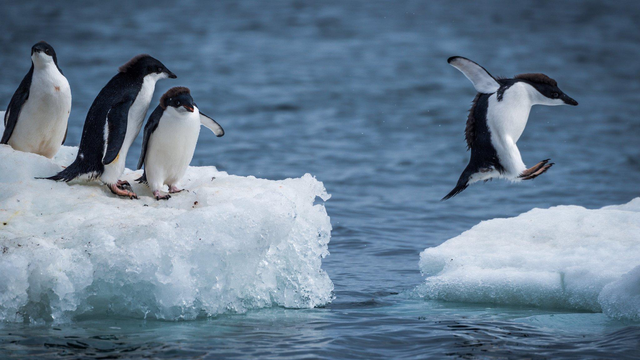 Recycling Antarctica