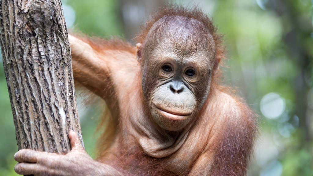 Biodiversity: UN report says 'it is not too late' to stop the world's wildlife crisis - CBBC Newsround