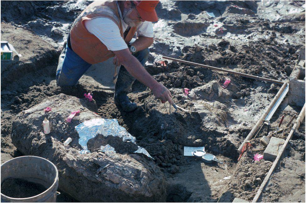 Los humanos, dicen los investigadores, rompían los huesos posiblemente para hacer herramientas o para alimentarse de la médula ósea.